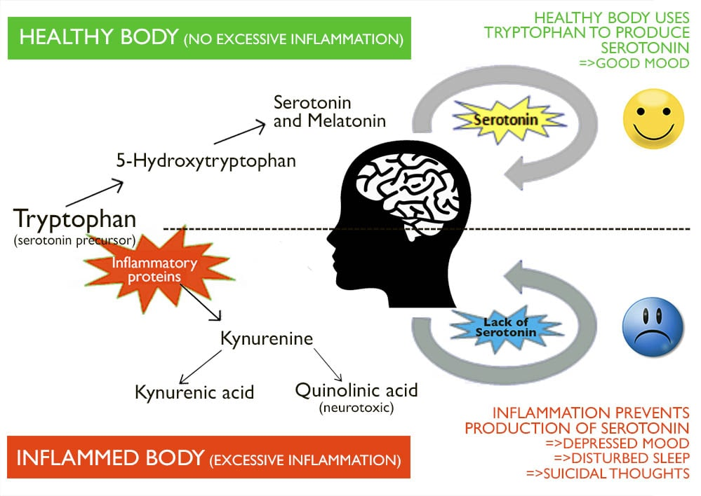 how inflammation affects tryptophan serotonin and leads to depression